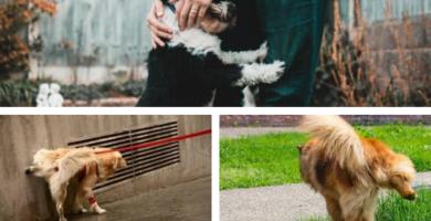 Como luchar contra el pipí de los perros en las fachadas